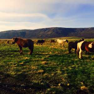 Iceland via Wayfaring With Wagner