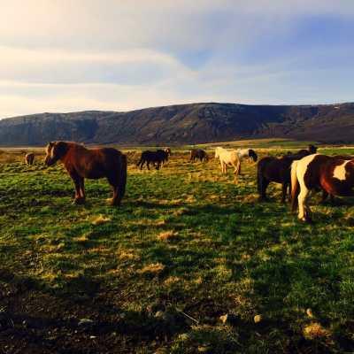Sneak Peek of Iceland!