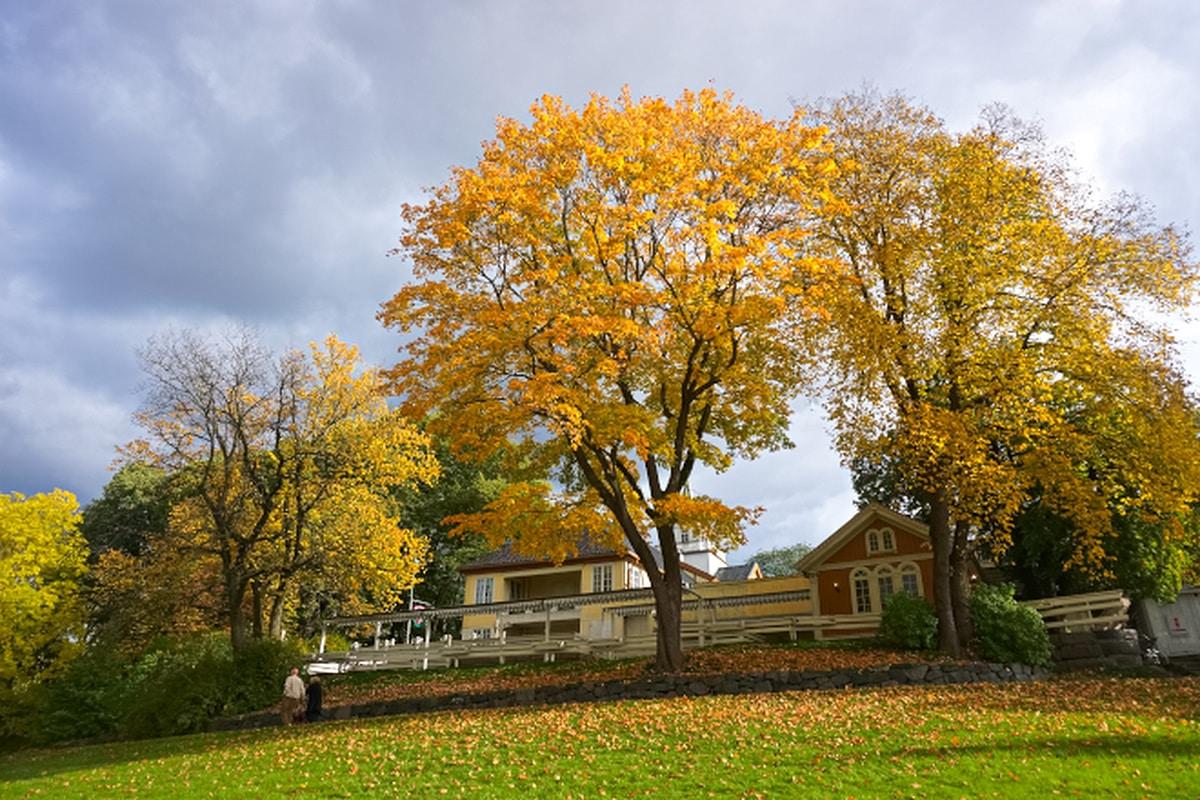 Autumn in Oslo via Wayfaring With Wagner