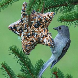 Bird Seed Ornament image courtesy Real School Gardens