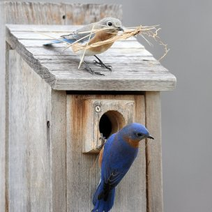 nesting_boxes