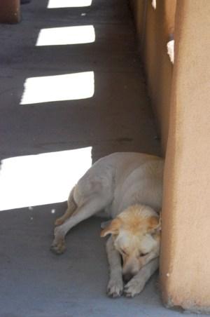 Dog San Miguel