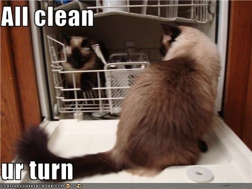 Image result for cats cleaning