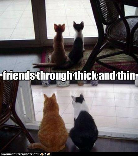 Do Cats Miss Their Cat Friends