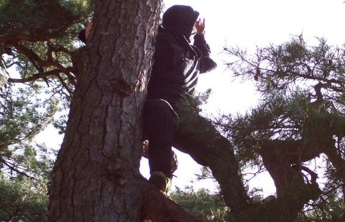 Ninja on a tree