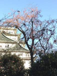 Nagoya Castle with Blossoming Tree