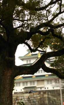 Osaka Castle behind a tree