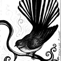 WTN_dessin-fantail