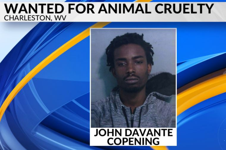 Warrant issued for suspect in West Side dog hanging