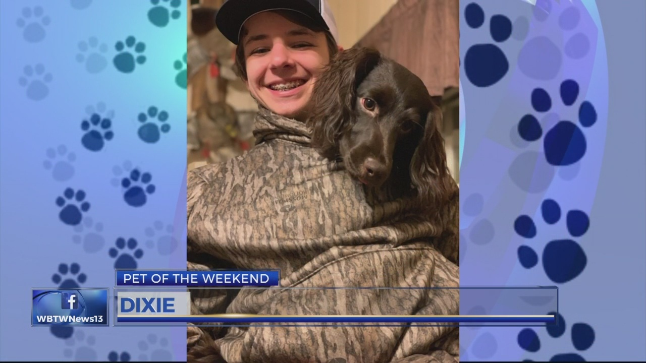 Pet of the Weekend: Dixie