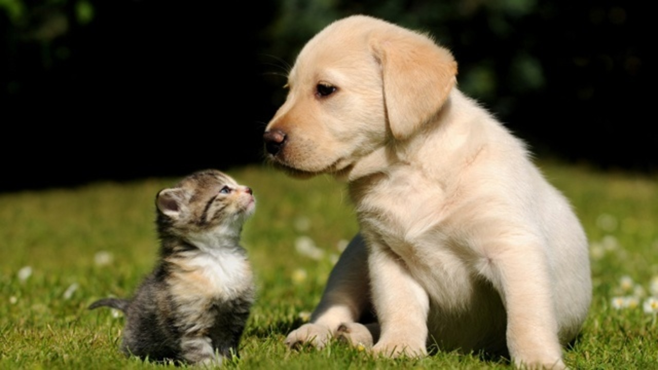 Puppy-and-kitten-jpg_158614_ver1_20180404055401-159532