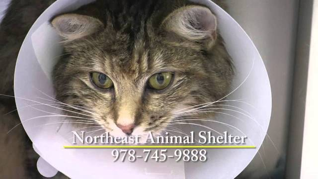 Shelter Tales, January Edition