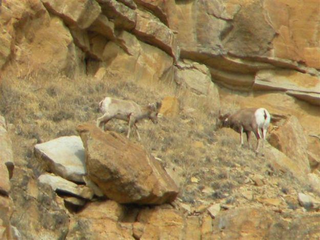 Wildlife at the W Diamond L Ranch