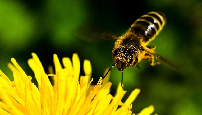 Bee_231628