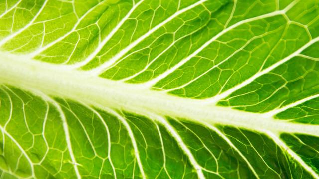 romaine-lettuce_1524148914242_40146723_ver1.0_640_360_1525293467877.jpg