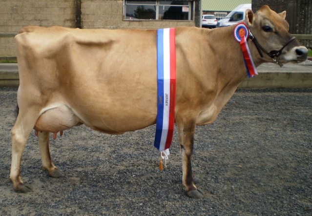 Cow Prize