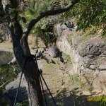 Wild-Africa-Trek-wdwradio-746