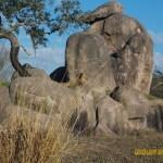 Wild-Africa-Trek-wdwradio-913