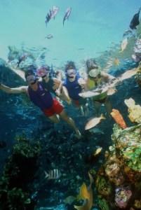 Shark Reef - disney