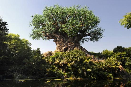 tree of life - disney