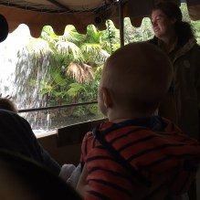 Walt on Jungle Cruise
