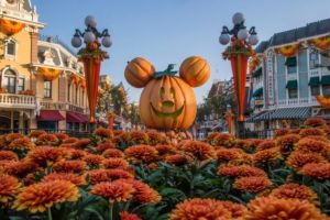 "alt=""Halloween pumpkins and orange mums on Main Street U.S.A. at the Disneyland Resort."""