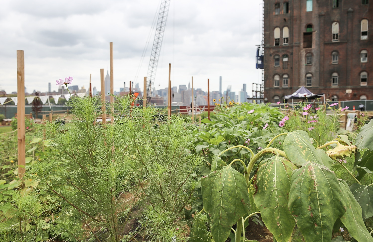north-brooklyn-farm-ferme-urbaine-a-new-york-3