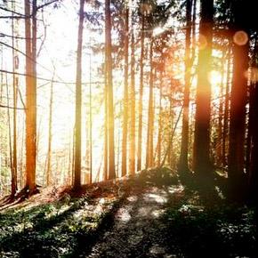 von Sonne durchfluteter Wald