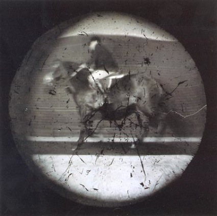 0aaap2ippin_horse.jpg