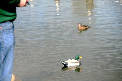 RC777 Duck.jpg