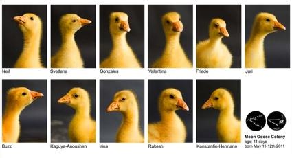 svetlanan_Goose_web_4.jpg