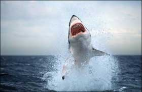 great_white_shark.jpg