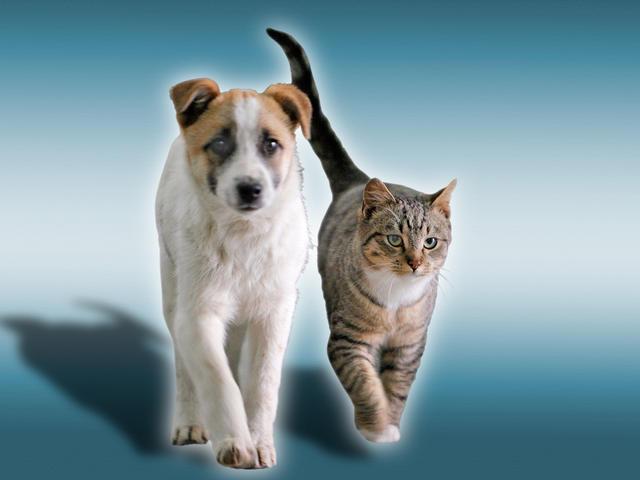 Dog Cat_1524542734542.jpg.jpg