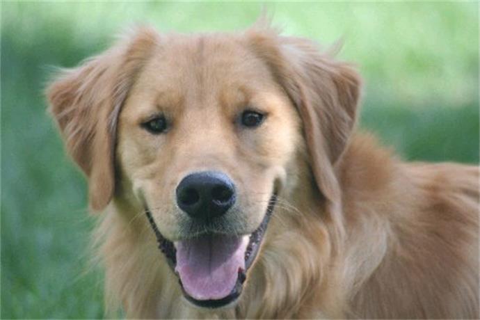 Dog License Challenge_-4317348977091392195