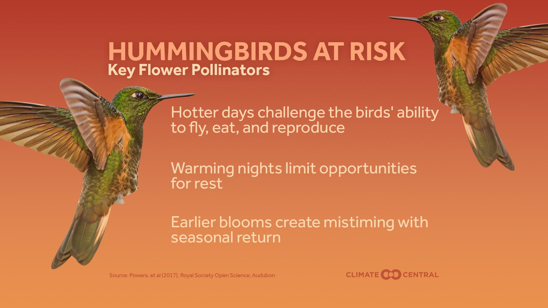 HUmmingbird_1526006124177.jpg