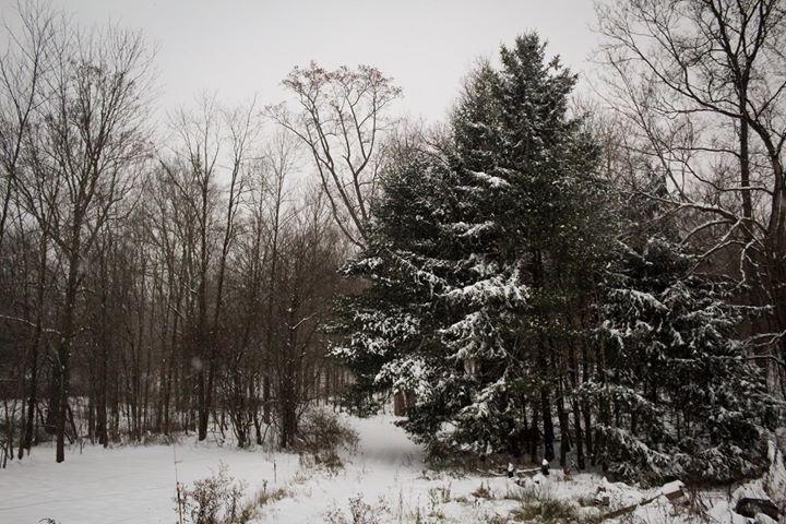 Snow in Imler 1_1542324650964.jpg.jpg