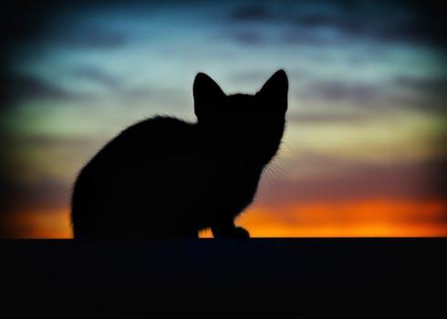 catshot_1539047964784.jpeg
