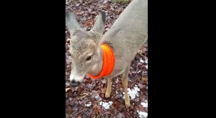 deer scarf_1480524652730.jpg