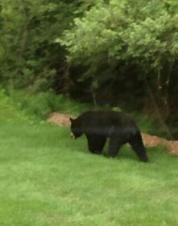 Green Bay bear_1501782003599.jpg