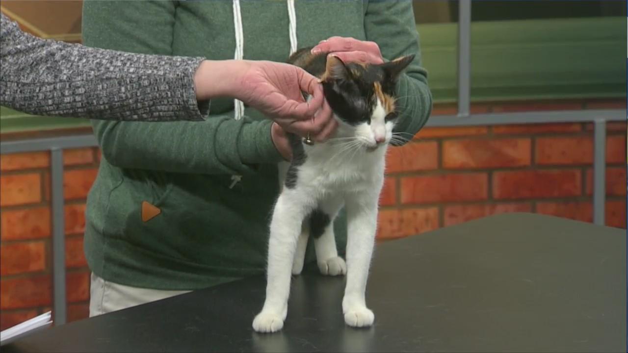 Pet Saver: Mama Rose