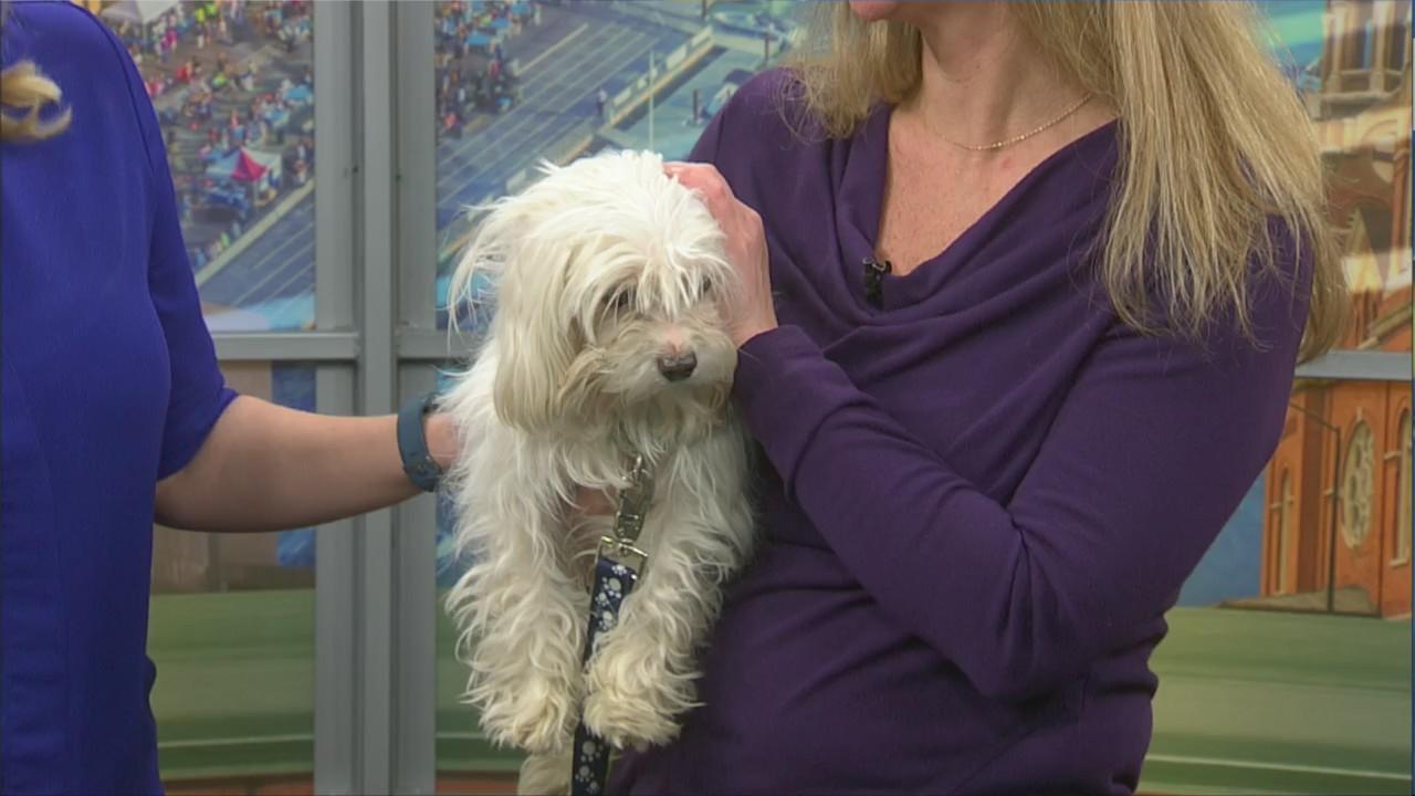 Bay Area Humane Society | WFRV Local 5