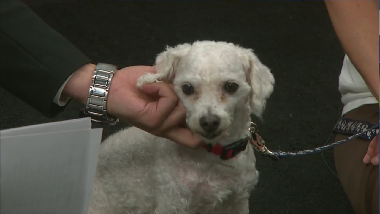 Pet Saver: Lambeau