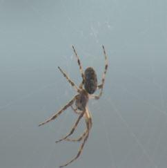 dock spider_1532311506317.JPG.jpg