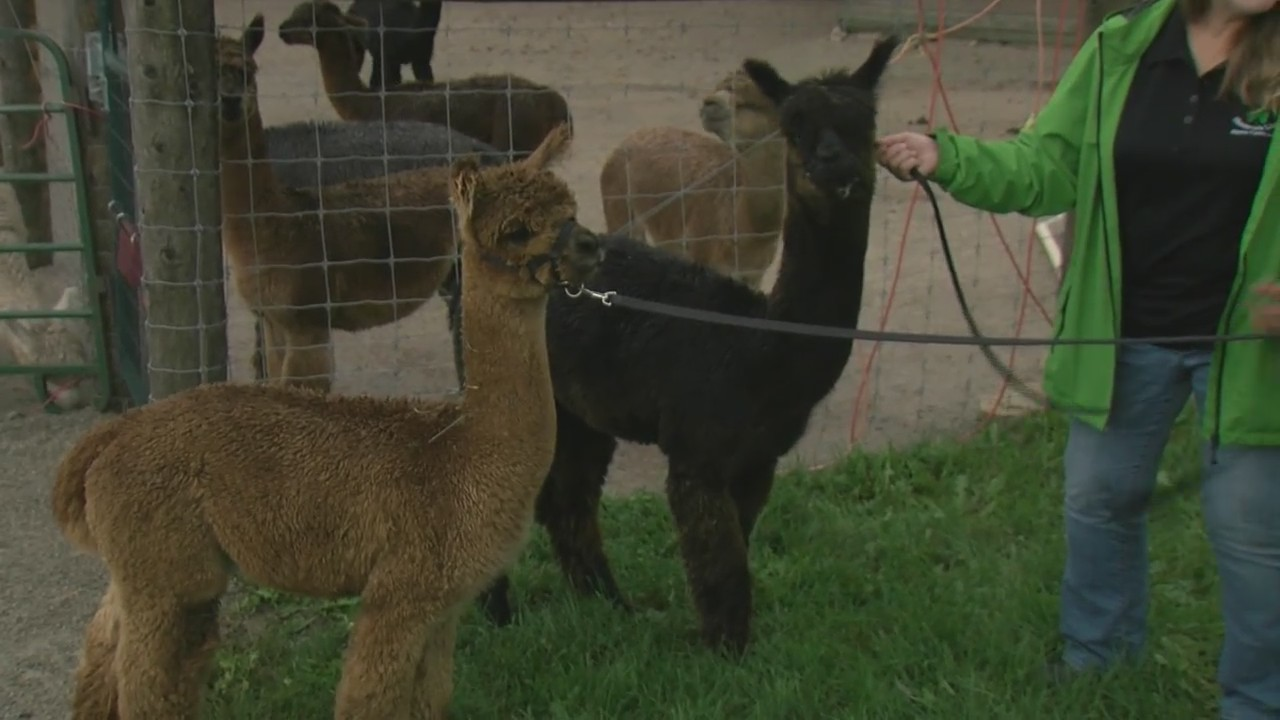 Farm Family: Shillcox Shamrock Lines