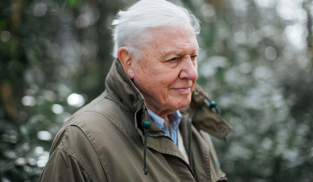 David Attenborough is hosting a remix competition