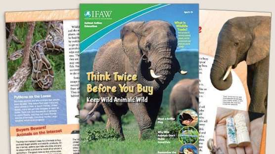 Grades 3-5: Keep Wild Animals Wild - Student Magazine