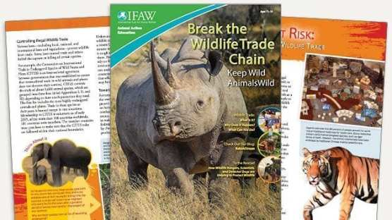 Grades 6-8: Keep Wild Animals Wild - Student Magazine