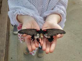 butterfly-world0100