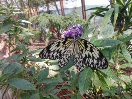 butterfly-world0119