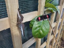 butterfly-world0122